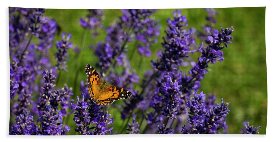 Door County Beach Towel featuring the photograph Butterfly On Lavender by Shawn Einerson