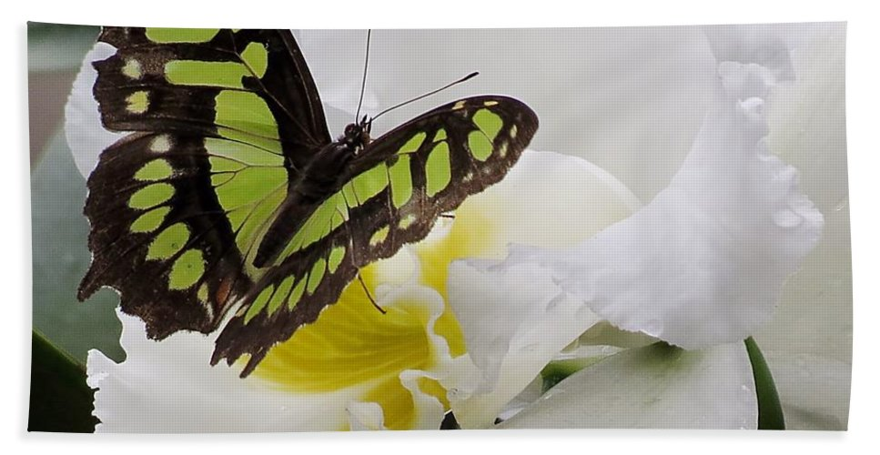 Butterfly Beach Towel featuring the photograph Butterfly On Orchid by MTBobbins Photography