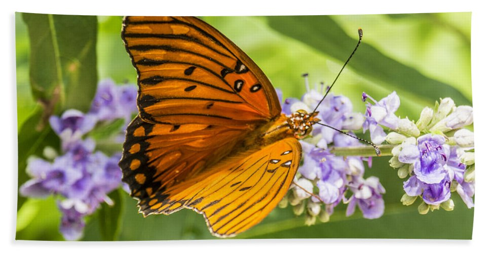 Butterfly Beach Towel featuring the photograph Butterfly On Purple by Craig David Morrison