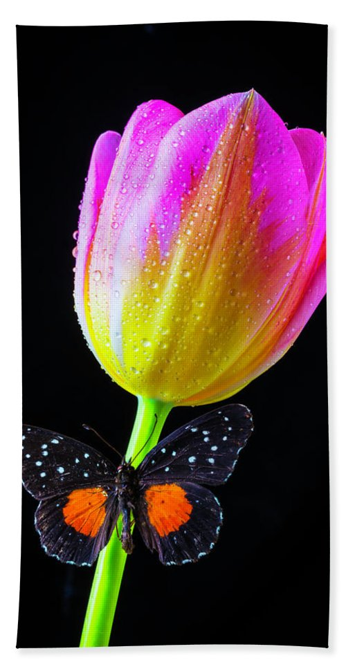 Green Beach Towel featuring the photograph Butterfly On Yellow Pink Tulip by Garry Gay