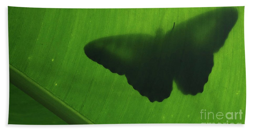 Images Beach Towel featuring the photograph Butterfly Silhouette On Leaf by Rick Bures