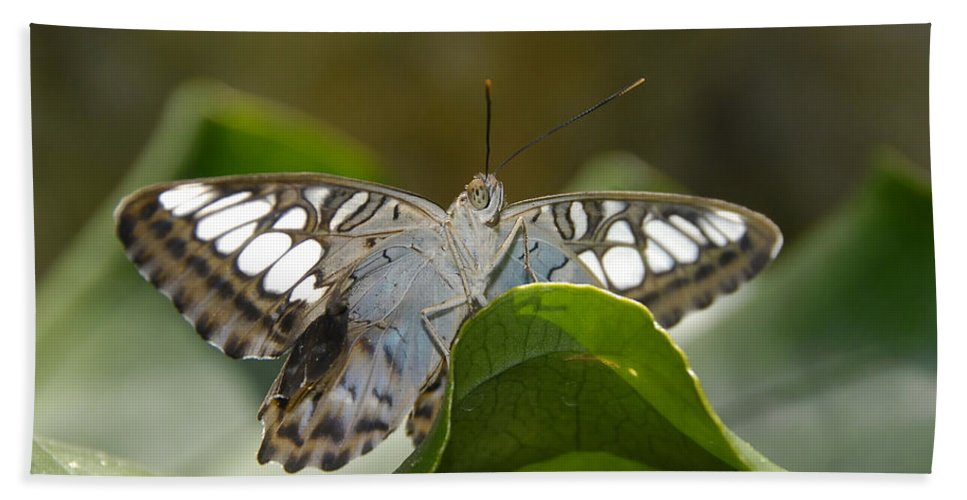 Pretty Beach Towel featuring the photograph Butterfly Watching by David Lee Thompson