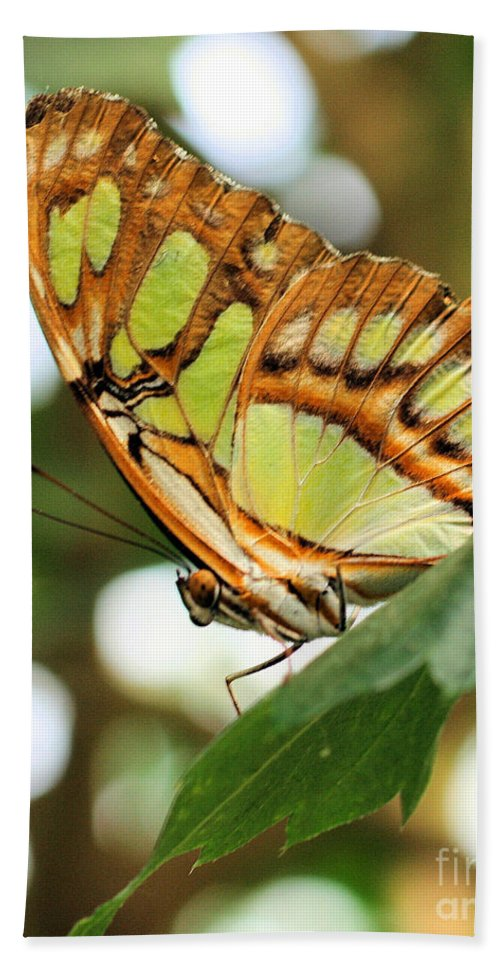 Butterfly Beach Towel featuring the photograph Butterfly Watching by Smilin Eyes Treasures