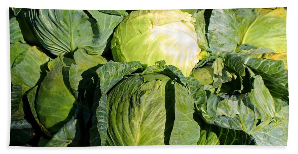 Cabbage Beach Towel featuring the photograph Cabbage by Michiale Schneider
