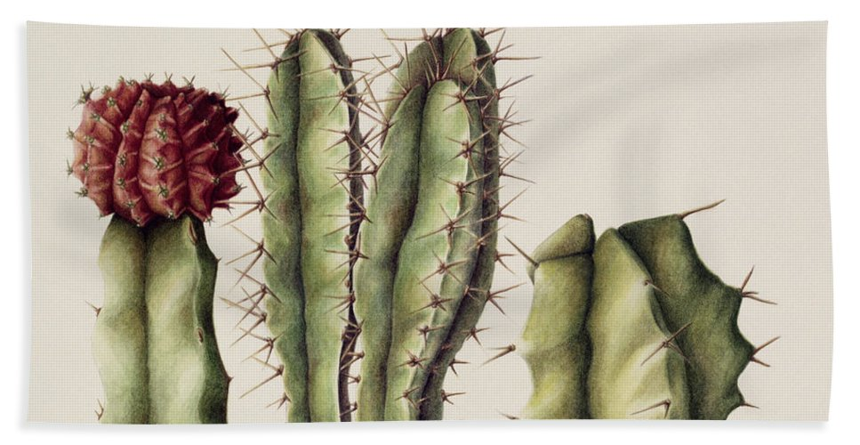 Botanical Beach Towel featuring the painting Cacti by Annabel Barrett