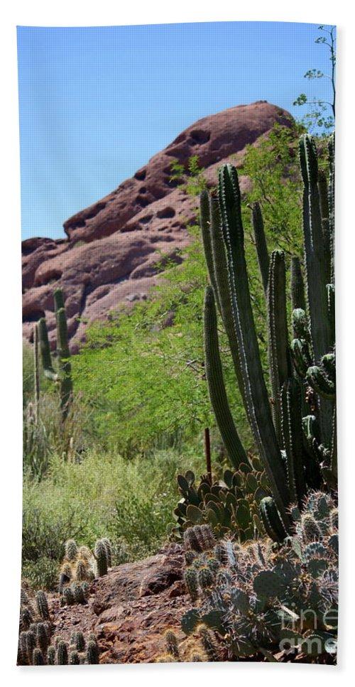 Cactus Beach Towel featuring the photograph Cacti Garden by Carol Groenen