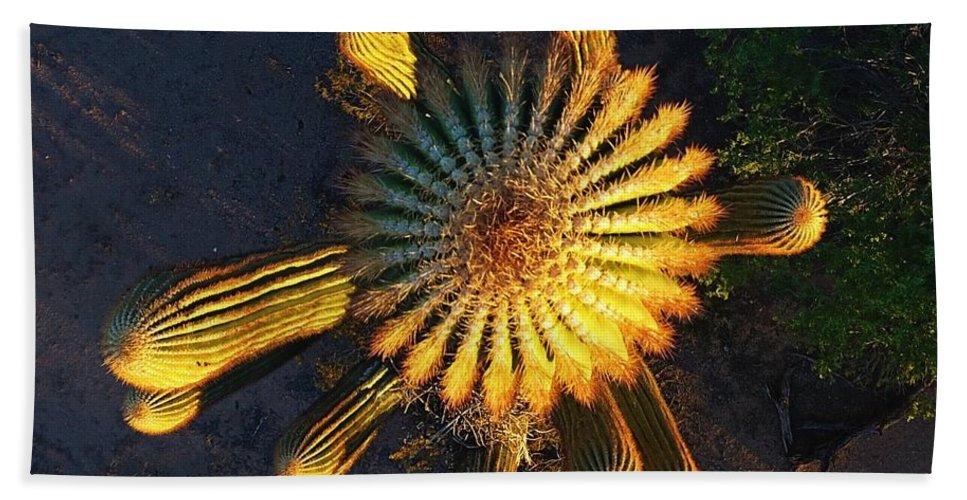 Cactus - Saguaro - Beach Towel featuring the photograph Cactu Sundown by Steve Winden