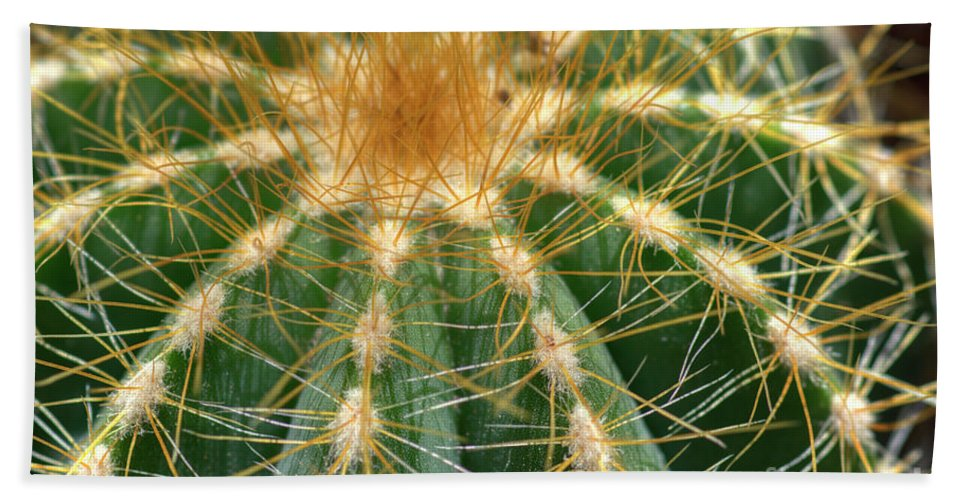 Cactus Beach Towel featuring the photograph Cactus 2 by Jim And Emily Bush