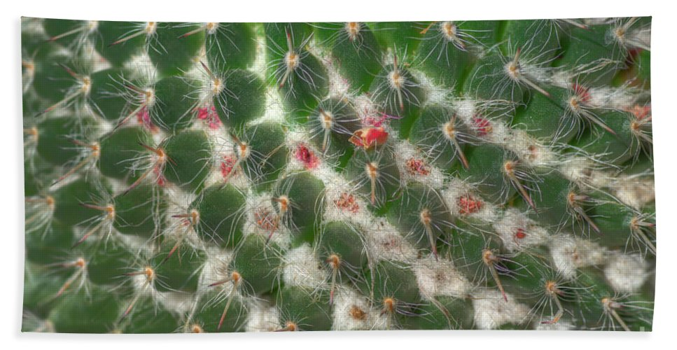 Cactus Beach Towel featuring the photograph Cactus 5 by Jim And Emily Bush