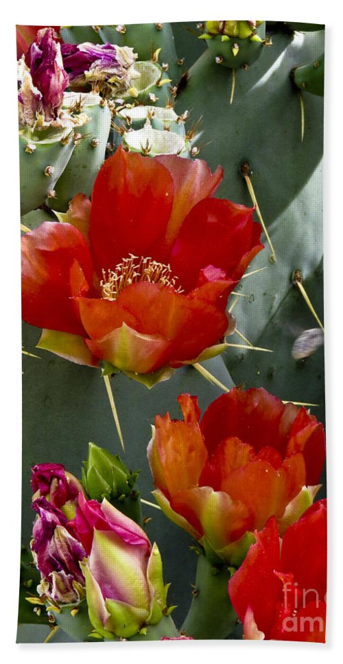 Arizona Beach Towel featuring the photograph Cactus Blossom by Kathy McClure