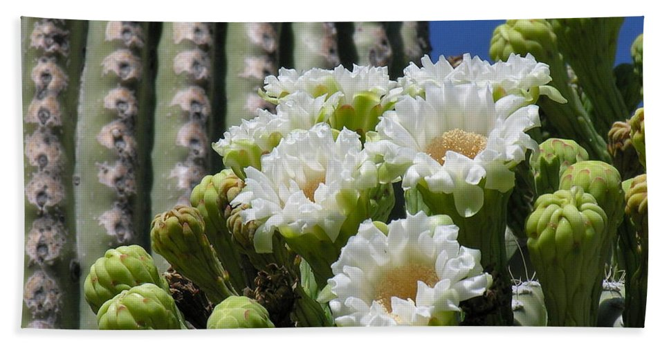 Cactus Beach Towel featuring the photograph Cactus Budding by Diane Greco-Lesser