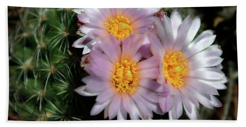 Cactus Beach Towel featuring the photograph Cactus Flower by Ric Bascobert