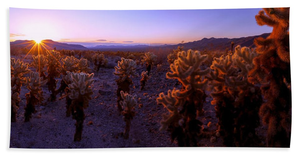 Prickly Beach Towel featuring the photograph Prickly by Chad Dutson