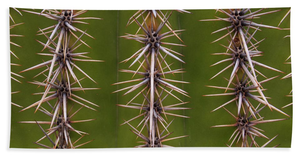 Arizona Beach Towel featuring the photograph Cactus Spines by Steve Wile