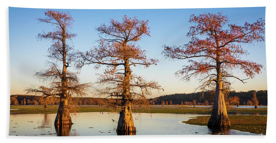 America Beach Towel featuring the photograph Caddo Three Trees by Inge Johnsson