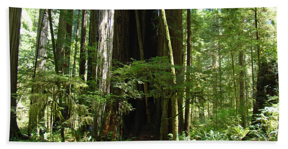 Redwood Beach Towel featuring the photograph California Redwood Trees Forest Art by Baslee Troutman