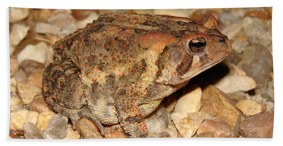Camouflage Beach Towel featuring the photograph Camouflage Toad by Brett Winn