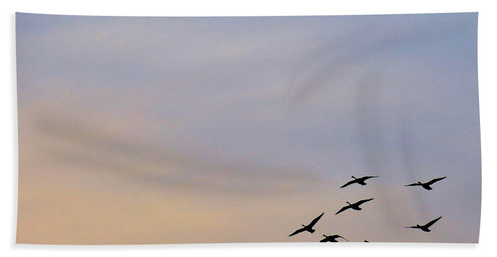 Bird Beach Towel featuring the photograph Canada Geese Take Flight by Rich Bodane