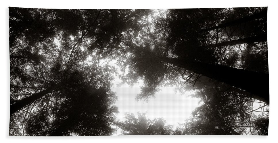 Trees Beach Towel featuring the photograph Canopy by Dave Bowman