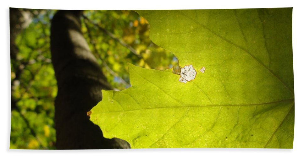 Leaves Beach Towel featuring the photograph Canopy View by Trish Hale