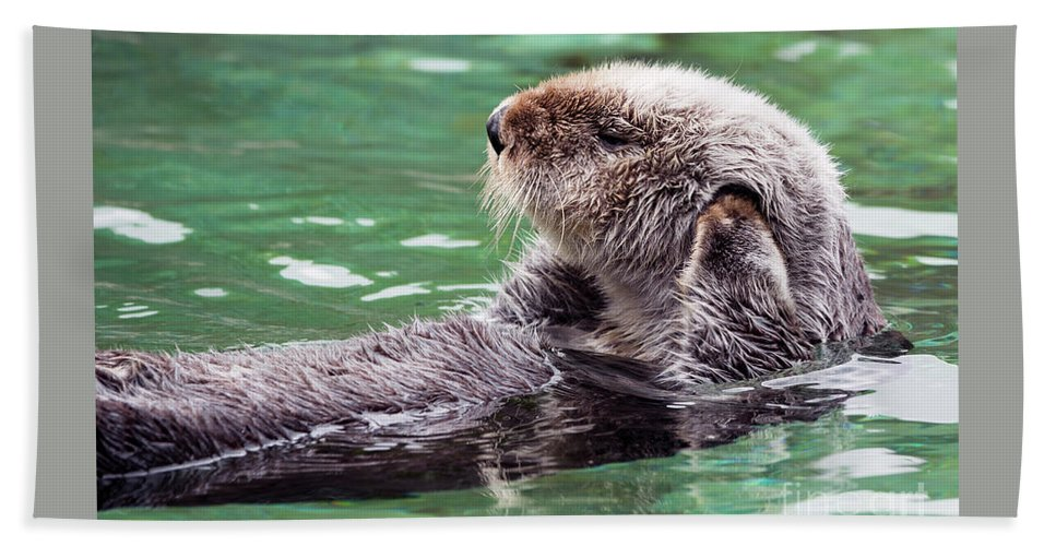 Otter Beach Towel featuring the photograph Can't Hear You by Mike Dawson
