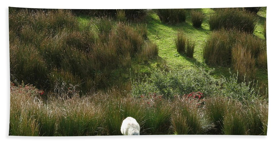 Sheep Beach Towel featuring the photograph Caora by Kelly Mezzapelle