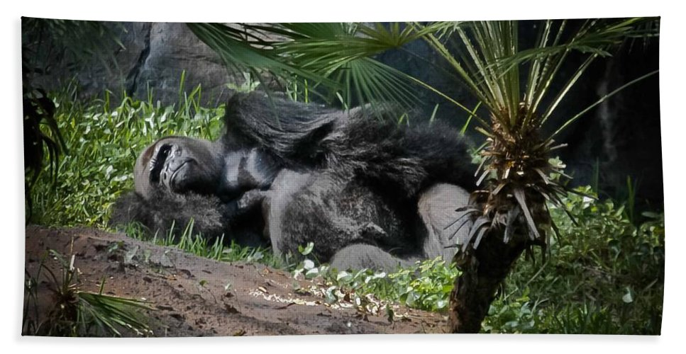 Gorilla Beach Towel featuring the digital art Captivity Is Heartbreaking by DigiArt Diaries by Vicky B Fuller