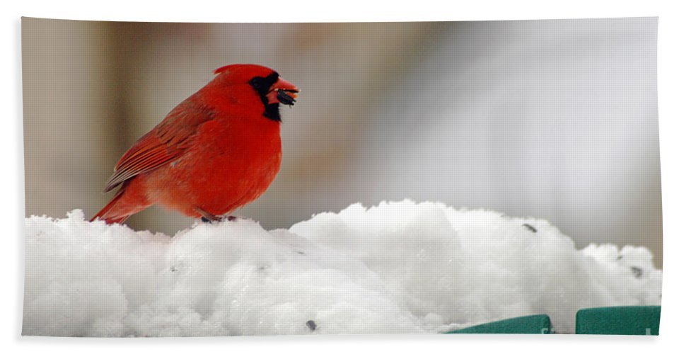 Clay Beach Towel featuring the photograph Cardinal In Snow by Clayton Bruster
