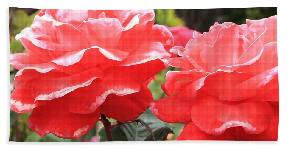 Carmel Mission Beach Towel featuring the photograph Carmel Mission Roses by Carol Groenen