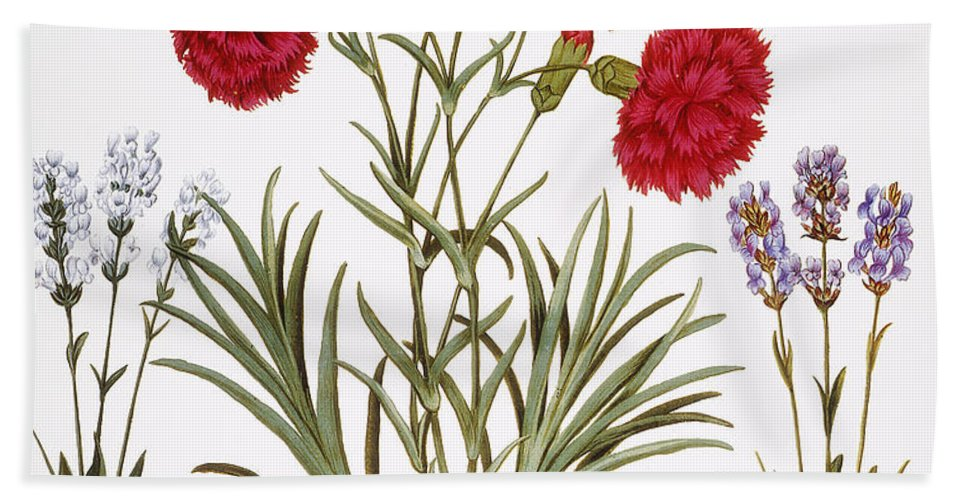 1613 Beach Towel featuring the photograph Carnation & Lavender, 1613 by Granger
