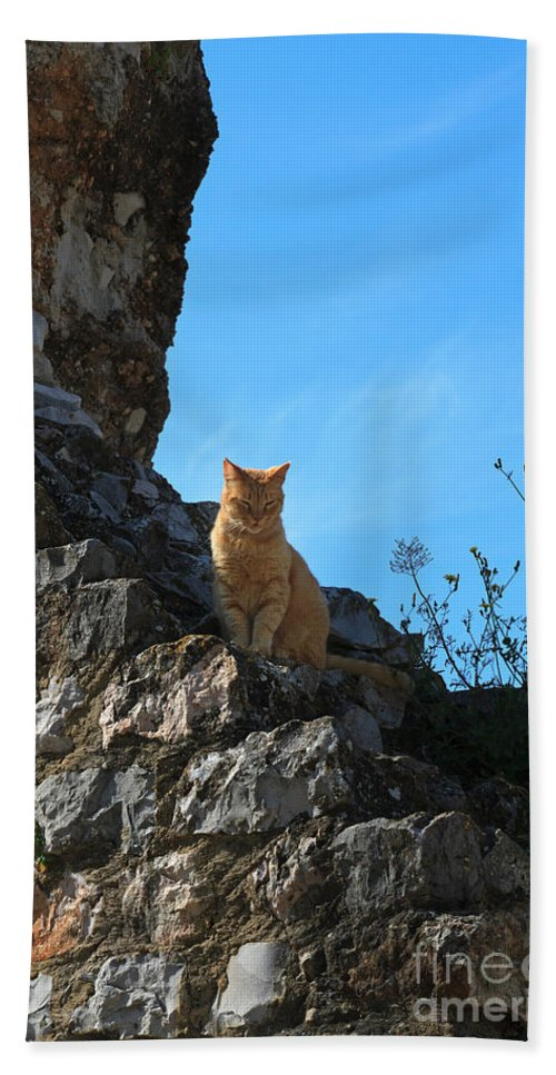 Cat Beach Towel featuring the photograph Castle Cat by Louise Heusinkveld
