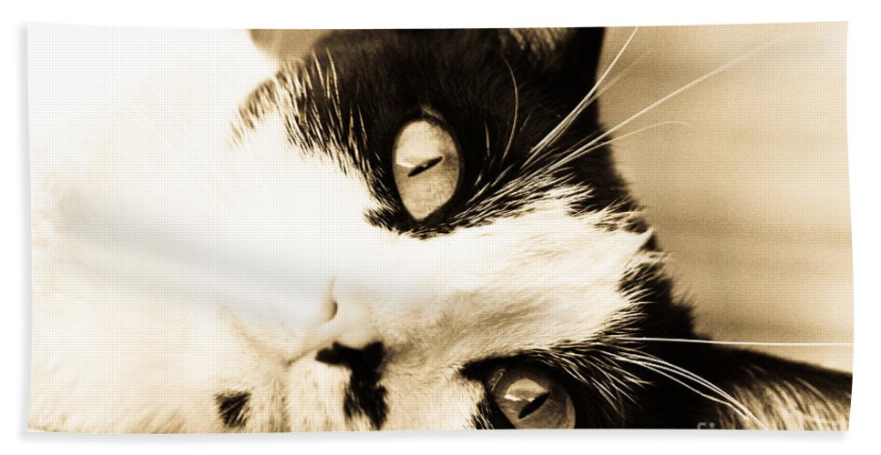 Cat Beach Towel featuring the photograph Cat Days Of Summer by Kim Henderson