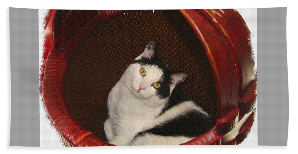 Cat Beach Towel featuring the photograph Cat In A Basket by Margie Wildblood