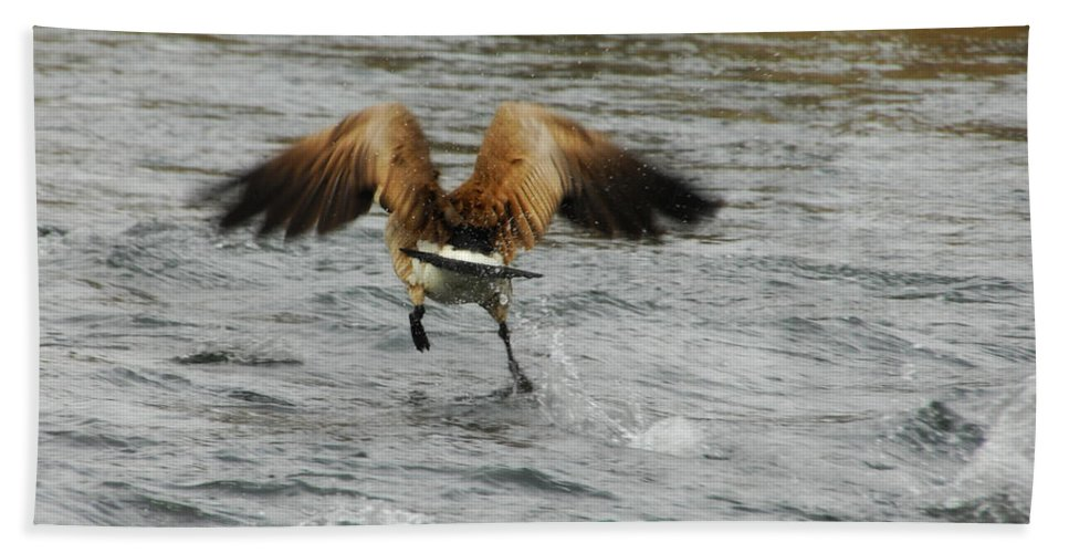 Goose Beach Towel featuring the photograph Catch Me If You Can by Donna Blackhall