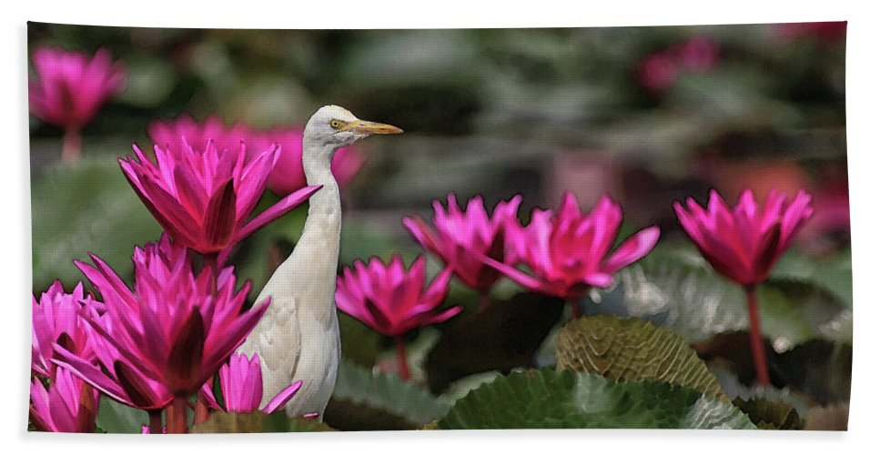 Bird Beach Towel featuring the digital art Cattle Egret amongst Waterlilies by Sandeep Gangadharan