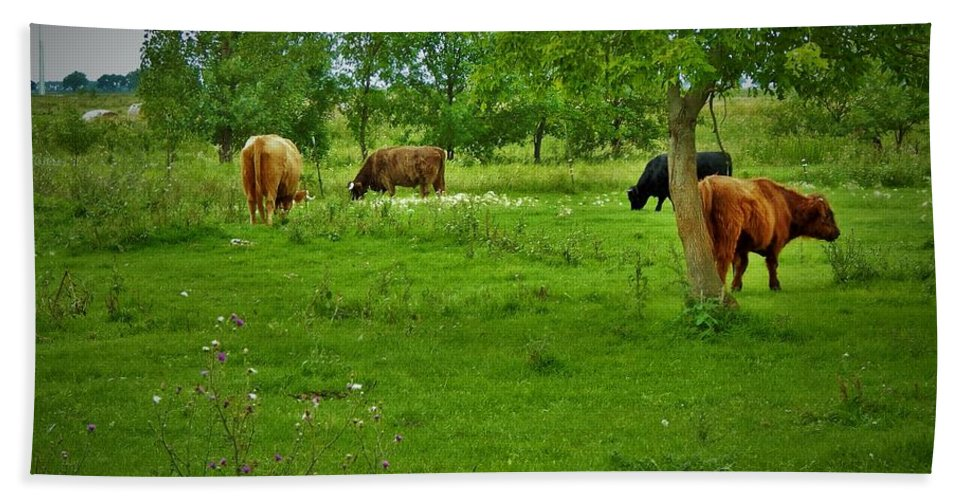 Cows Beach Towel featuring the photograph Cattle Grazing In A Lush Pasture by Curtis Tilleraas