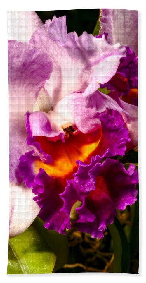 Flower Beach Towel featuring the photograph Cattleya IIi by Christopher Holmes