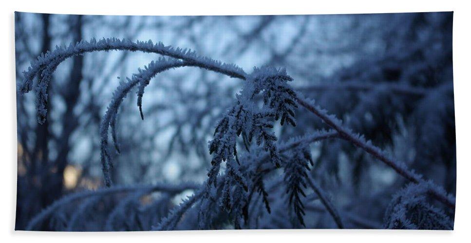 Cedar Beach Towel featuring the photograph Cedars Of Ice by Cindy Johnston