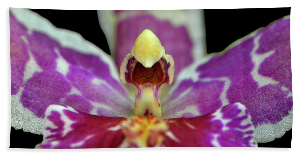 Macro Beach Towel featuring the photograph Centerpiece - Purple Orchid Macro by George Bostian