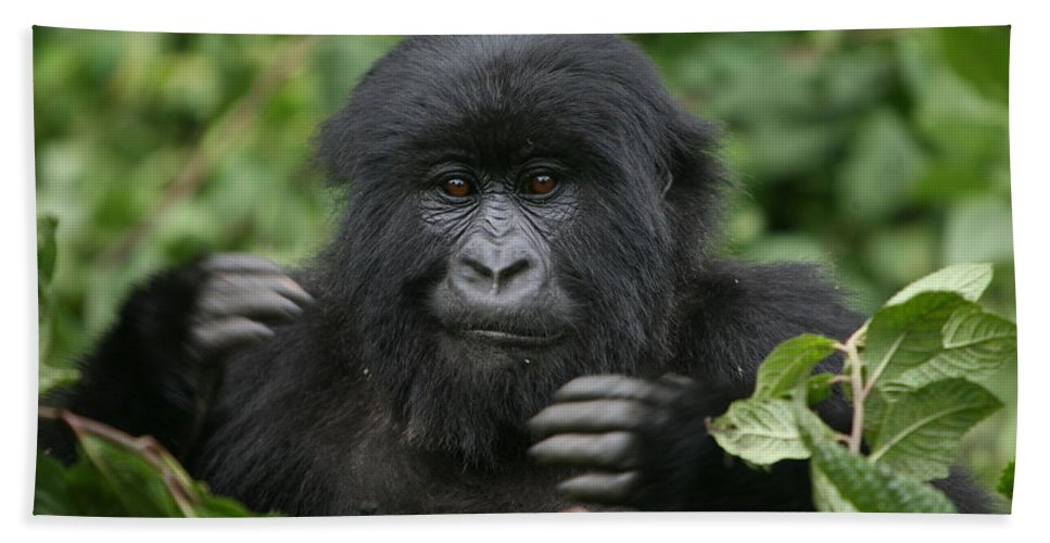 Gorilla Beach Towel featuring the photograph Challenge - Mountain Gorilla by Bruce J Robinson