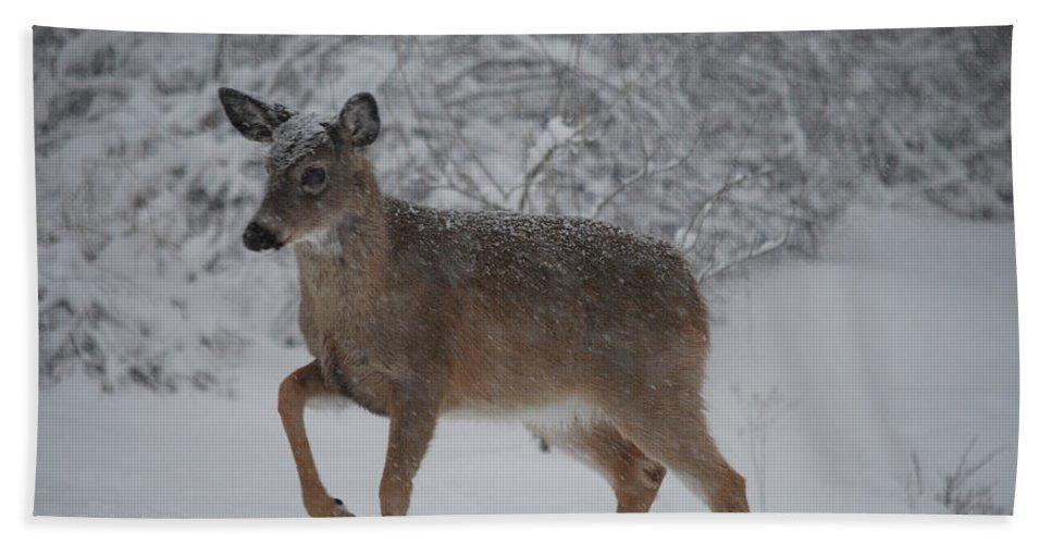 Deer Beach Towel featuring the photograph Charge by Lori Tambakis