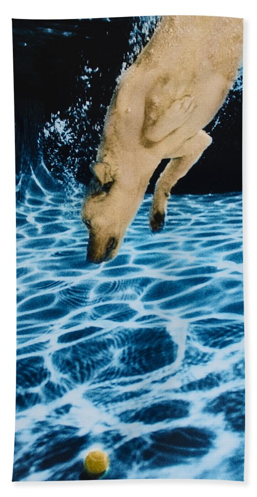 Dog Beach Towel featuring the photograph Chase 2 by Jill Reger