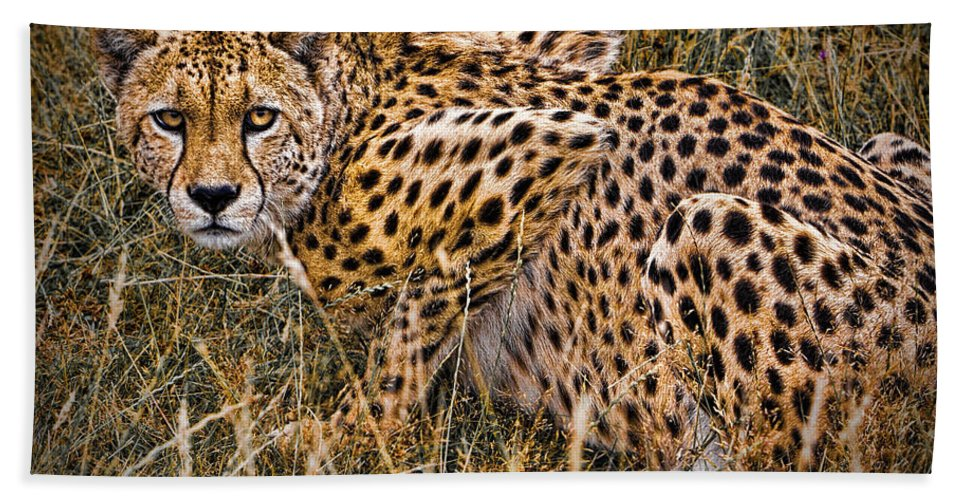 Big Beach Towel featuring the photograph Cheetah In The Grass by Chris Lord
