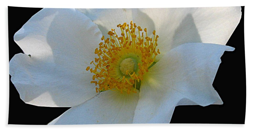 Cherokee Rose Beach Towel featuring the photograph Cherokee Rose On Black by J M Farris Photography