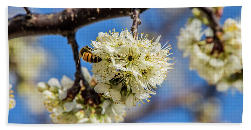 Pear Blossom Beach Towel featuring the photograph Pear Blossom And Bee by Anthony Evans