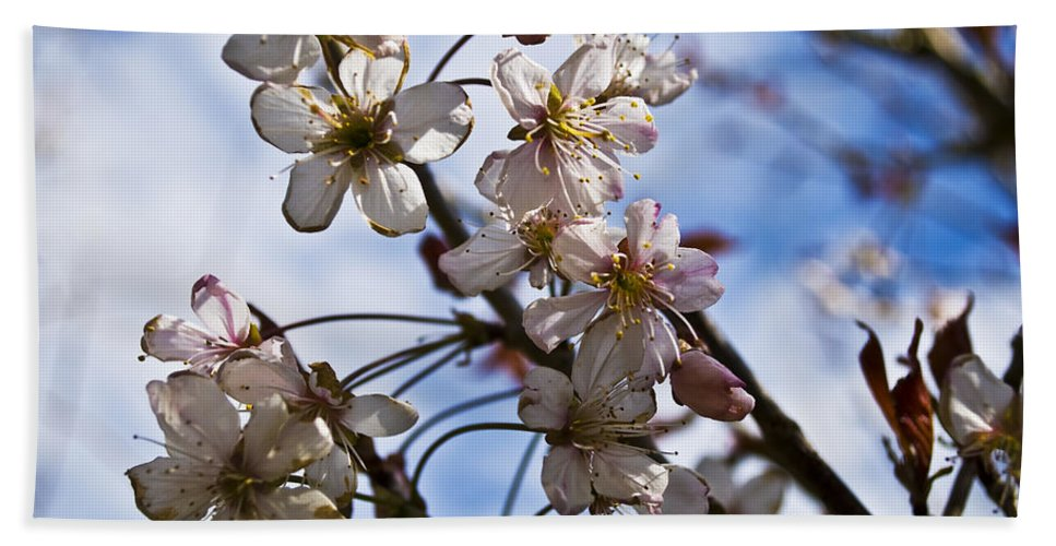 Flower Beach Towel featuring the photograph Cherry Blossom Tree by Svetlana Sewell