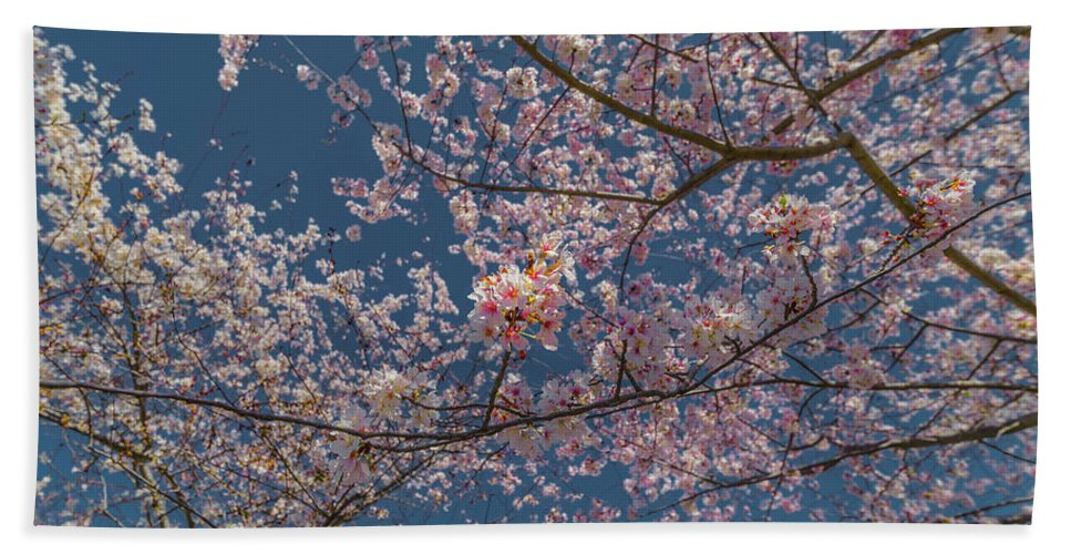 Flower Beach Towel featuring the photograph Cherry Blossoms In Bloom by C U Fotography