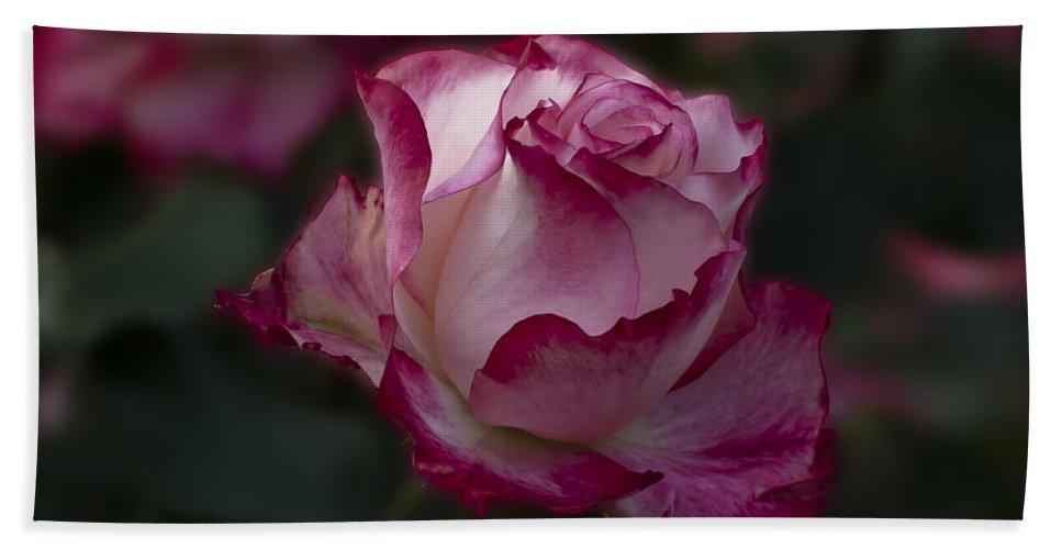 Cherry Parfait Beach Towel featuring the photograph Cherry Parfait Rose by Emerald Studio Photography
