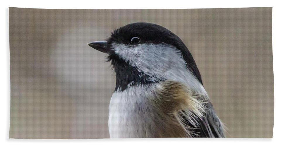 Chickadee Beach Towel featuring the photograph Chickadee Close Up by Cecille Gagne