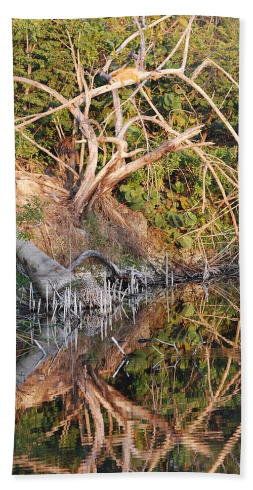 Iguana Beach Towel featuring the photograph Chilling Iguana by Rob Hans